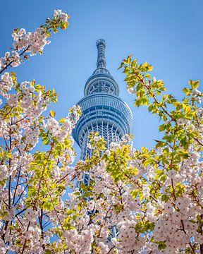 Tokyo Skytree in Japan während der Sakura (Kirschblüte) von Annette Roijaards