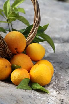Sinaasappels van Larka Louwe