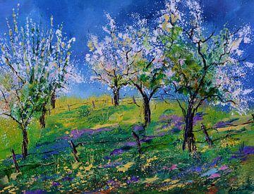 Obstgarten im Frühling von pol ledent