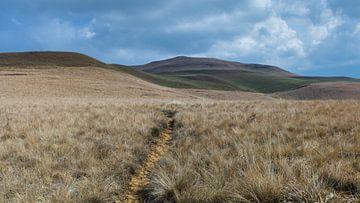 Paadje door de Drakensbergen van Timo Bergenhenegouwen