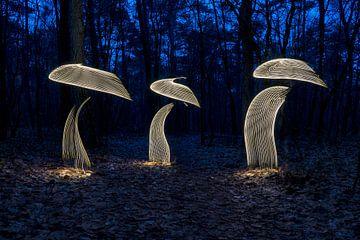 Lightpainting-Pilze von Liesbeth van Asselt