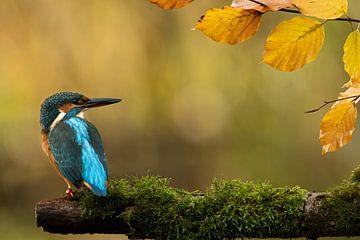 IJsvogel in najaarszon. van Gerrit van de Velde