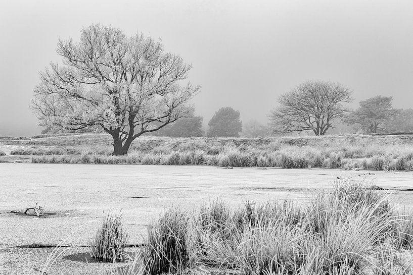 Berijpte bomen in winters landschap van Peter Bolman