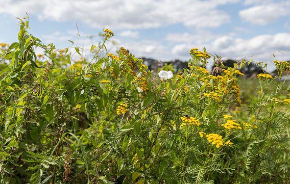 veld met gele en witte veldbloemen