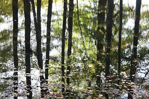 Reflectie van de bomen in het water in de herfst van