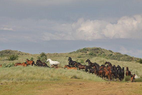 Paarden in de Kooikersdunen van Rinnie Wijnstra