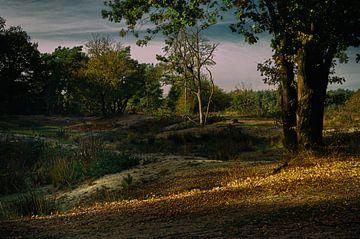 Arcadisch landschap Natuurgebied Maashorst Uden van HvNunenfoto