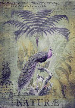 Nostalgische pauwen in het regenwoud van Andrea Haase