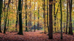 Drentse bossen van Frans Plat