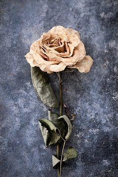 gedroogde roos op zinken ondergrond van Karel Ham
