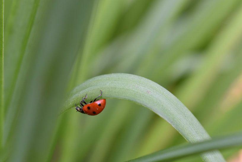 Een lieveheersbeestje op reis door de natuur van Highthorn Photography
