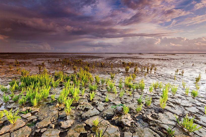 Wadden met Zeekraal planten en wolkenlucht van Mark Scheper