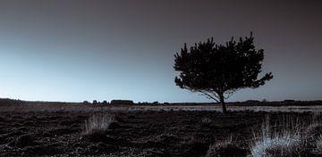 Groote Heide 4 sur Desh amer