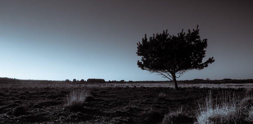 Groote Heide 4 van Deshamer
