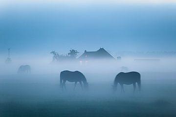 Grasenden Pferden von