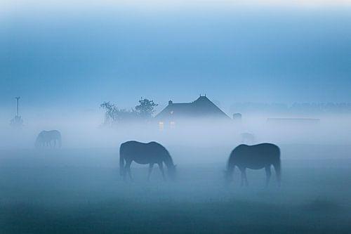 Grasenden Pferden von Evert Jan Luchies