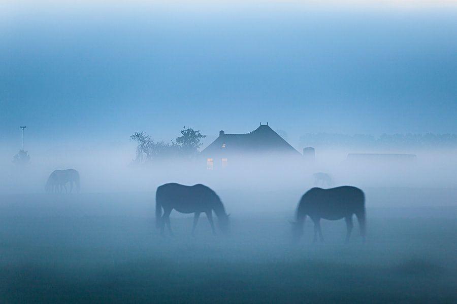 Grazende paarden in de mist bij Dorkwerd in Groningen
