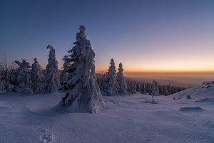 Winter Evening van