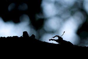 Silhouet van een vliegend hert van