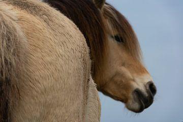 Pferd von Silvia Rikmanspoel