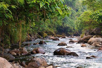 tropisch riviertje van Ronenvief