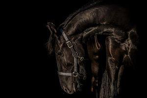 Hiske in black