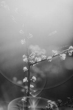 Kleine Frühlingsdetails im Sonnenlicht in Schwarz und Weiß von Holly Klein Oonk