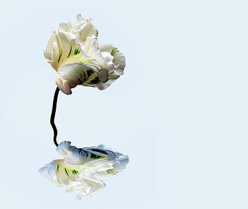 Papagei Tulpe mit einer Reflexion im Wasser von Marijke van Loon