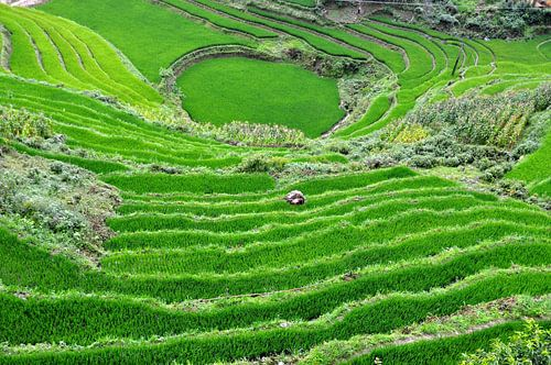 Rijstveld Vietnam von Vladimir Neski