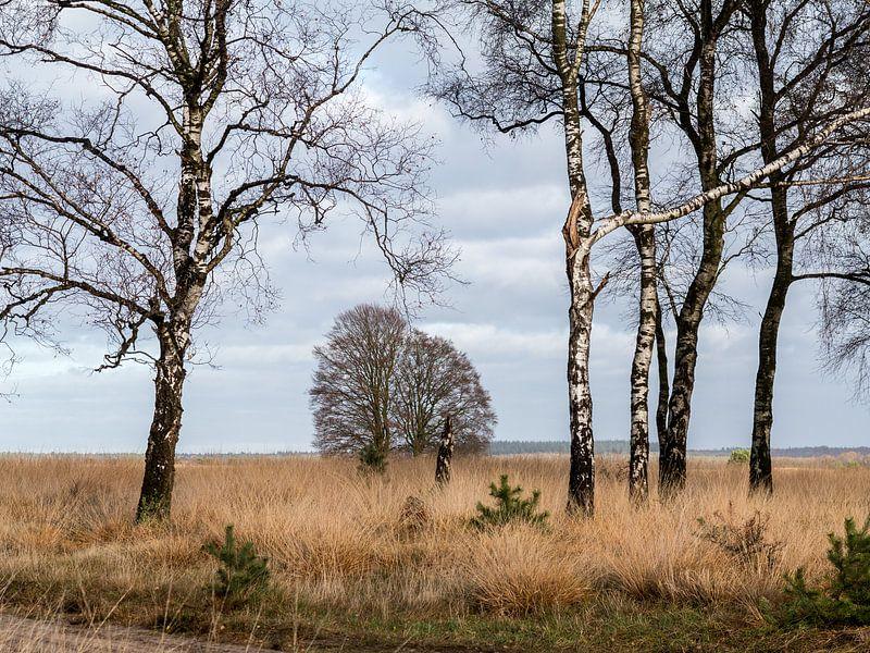 Birken auf dem Moor von Jim van Iterson