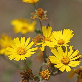 gele bloemen van laura van klooster