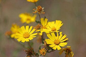 gele bloemen von laura van klooster
