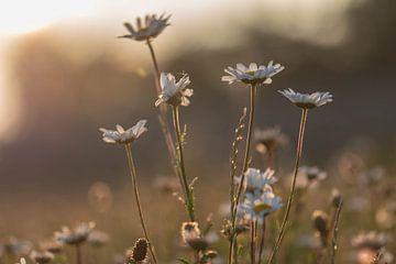 Sommer-Bouquet von Tania Perneel