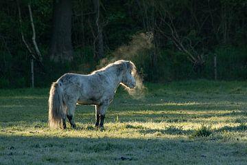 Dampend paardje in de ochtend