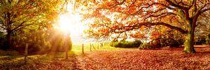 Landschap in de herfst
