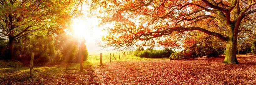 Landschap in de herfst van Günter Albers