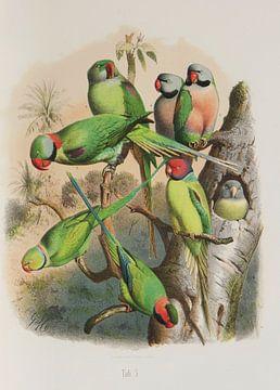 Papegaaien uit verre streken, Anton Reichenow van Teylers Museum