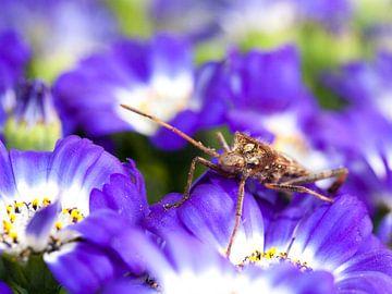 Paars violett van Anneke Kroonenberg