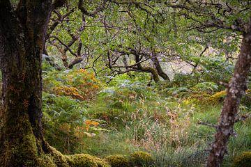 In een bos in Schotland van Fred Louwen
