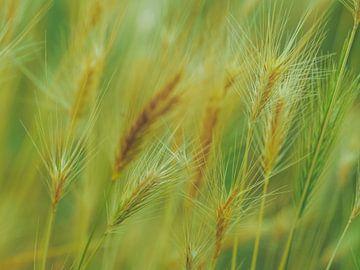 Gräser 1 von Miriam Meijer, en plein campagne.....