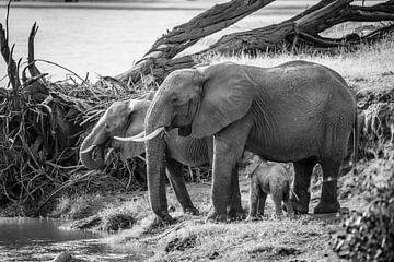 Trinkende Elefanten am Fluss in schwarz-weiß von Dave Oudshoorn