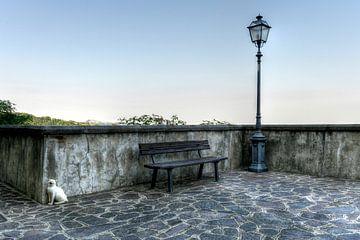 Farindola Cats -  Italië van Rob Severijnen
