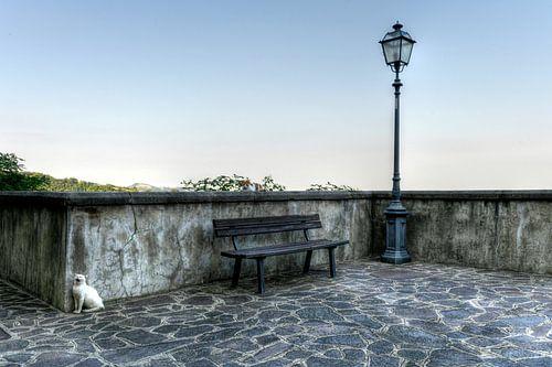 Farindola Cats -  Italië