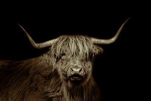 Schottischer Highlander, langhaariges Rind, in schwarz und weiß von Gert Hilbink