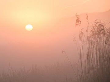 Zonsopgang in de Schiedamse polder van Karen de Geus