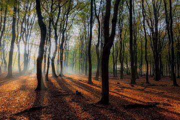Speulderbos (Niederlande) von Albert Mendelewski