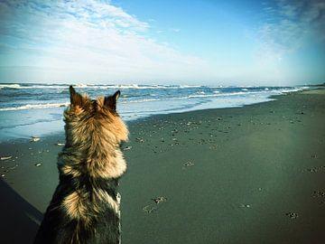 Duitse herder op het strand van Toekie -Art