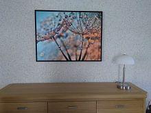 Kundenfoto: Pusteblume Lichtreflexe von Julia Delgado, auf leinwand