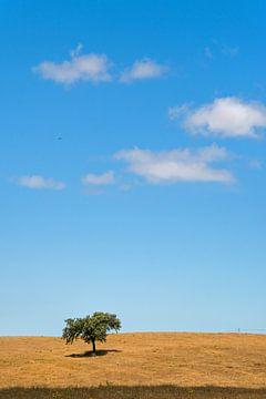 Landschap met een boom en een paar wolkjes in een blauwe lucht van