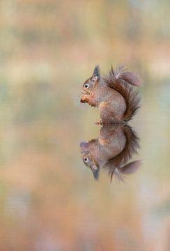 Spiegeltje spiegeltje aan de wand... van Larissa Rand